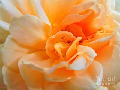 Photograph - Twisted Dreamsicle by Chad and Stacey Hall