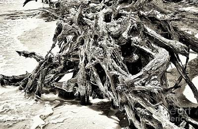 Twisted Driftwood Art Print