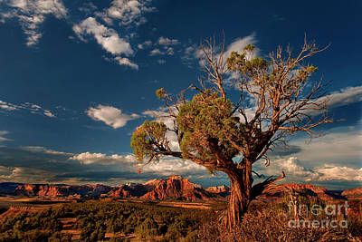 Photograph - Twisted Juniper Back Of Zion Formations Zion National Park Utah  by Dave Welling