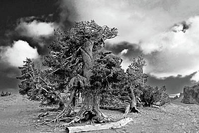Pine Trees Photograph - Twisted Old Bristlecone Pine Above Crater Lake - Oregon by Christine Till