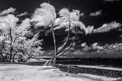 Infra-red Photograph - Twisted Palm Trio - Landscape by Sean Davey