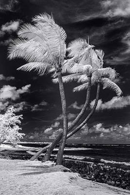 Infra-red Photograph - Twisted Palm Trio by Sean Davey