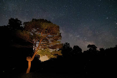Photograph - Twisted Pine And Milky Way by Steve Stuller