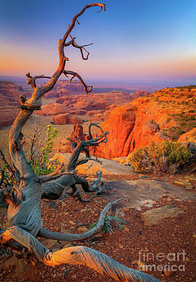 Red Cliff Photograph - Twisted Remnant by Inge Johnsson