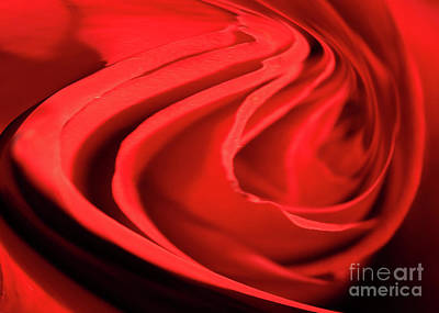 Photograph - Twisted Rose by Crystal Harman
