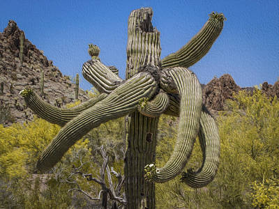 Photograph - Twisted Saguaro by Jean Noren