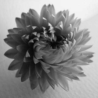 Photograph - Twisted Straw Flower by Barbara St Jean