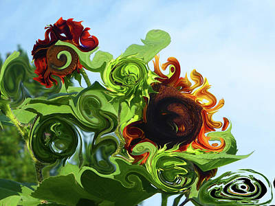 Photograph - Twisted Sunflower by Tina M Wenger
