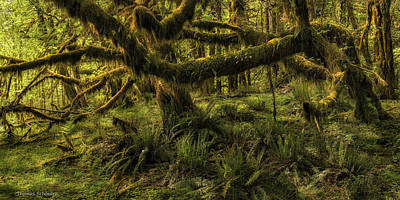 Photograph - Twisted  by Expressive Landscapes Fine Art Photography by Thom
