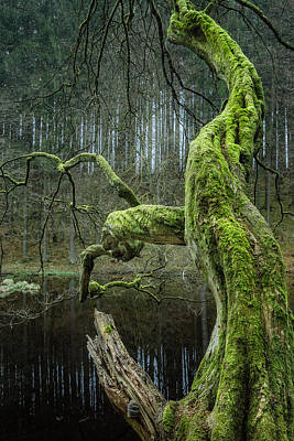 Photograph - Twisted Tree by Alexander Kunz