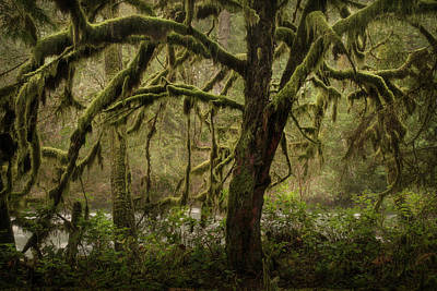 Photograph - Twisted Tree And Qualicum River by Adam Gibbs
