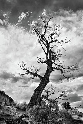 Photograph - Twisted Tree by Art Cole