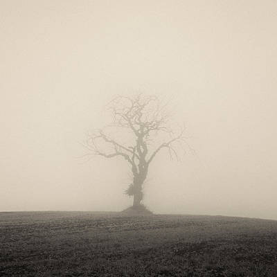 Photograph - Twisted Tree by Dave Bowman