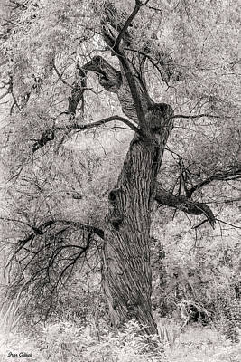 Photograph - Twisted Tree by Fran Gallogly