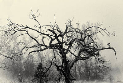 Photograph - Twisted Tree In Fog by Tony Grider