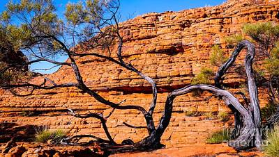 Photograph - Twisted Tree - Kings Canyon, Northern Territory, Australia by Lexa Harpell