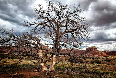 Keef Photograph - Twisted Tree Landscape by Diana Powell