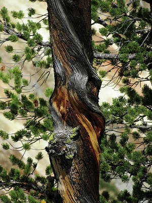 Photograph - Twisted Tree by Laurel Powell
