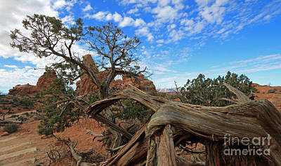 Photograph - Twisted Tree  by Mary Haber