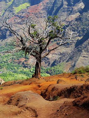 Kawai Photograph - Twisted Tree, Wiamea Canyon, Kawai Hawaii by Michael Bessler