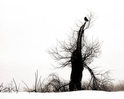 Twisted Tree With Snow Crow Art Print by Gothicrow Images