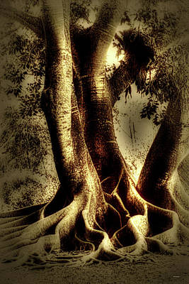Tree Roots Photograph - Twisted Trees by Tom Prendergast