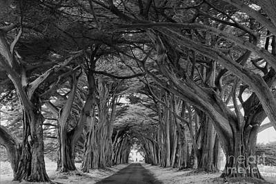 Photograph - Twisted Tunel Black And White by Adam Jewell