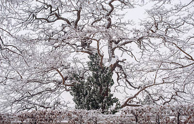 Photograph - Twisted Winter Tree by Jenny Rainbow