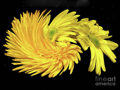 Digital Art - Twisted Yellow Daisies by Merton Allen