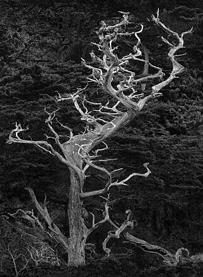 Photograph - Twists Of Cyprus by Art Cole