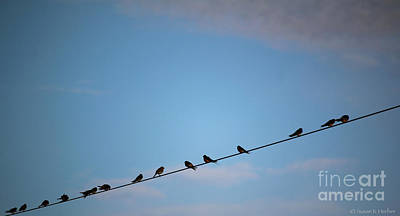 Photograph - Twitter Line by Susan Herber