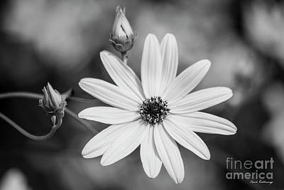 Photograph - Two And One B W Black Eyed Susan Flower Art by Reid Callaway