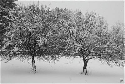 Photograph - Two Apples In February Snowstorm by Wayne King