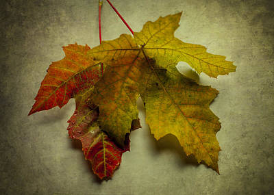 Photograph - Two Autumn Leaves by Terry DeLuco