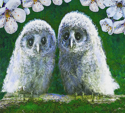 Digital Art - Two Baby Owls by Jane Schnetlage