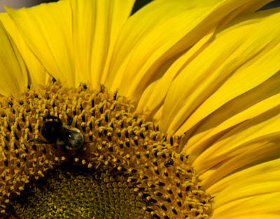 Photograph - Two Bees Or Not Two Bees by Mark Wiley