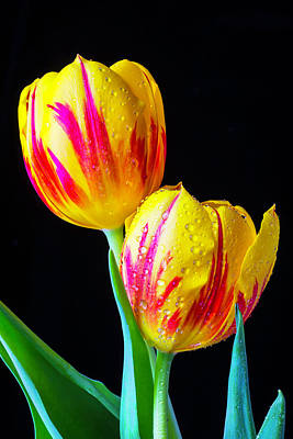 Red Beads Photograph - Two Besutiful Tulips by Garry Gay