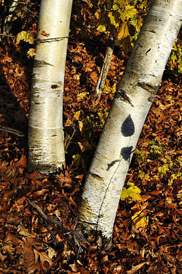 Two Birch Trees Art Print
