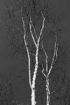 Photograph - Two Birches 2018 Bw by Mary Bedy