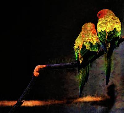 Photograph - Two Birds by Kristalin Davis