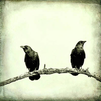 Two Crows Photograph - Two Birds One Branch Texture Square by Terry DeLuco
