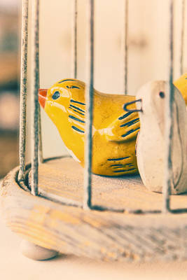 Photograph - Two Birds One Cage by Caitlyn Grasso