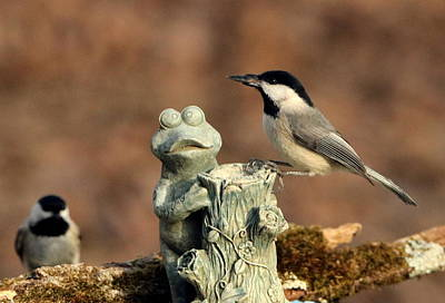 Two Black-capped Chickadees And Frog Art Print by Sheila Brown