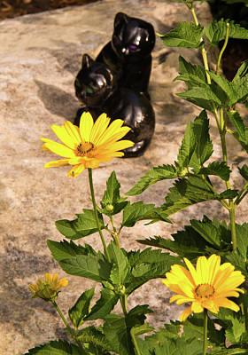 Homesickness Photograph - Two Black Cats And False Sunflowers by Douglas Barnett