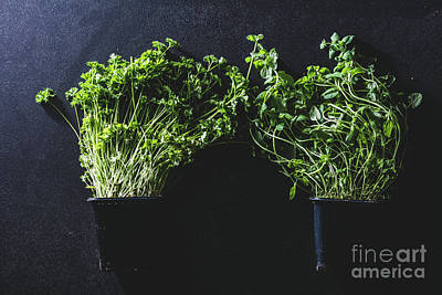 Photograph - Two Black Pots With Basil And Parsley by Michal Bednarek