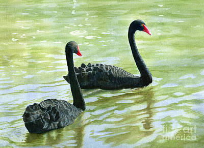 Water Media Painting - Two Black Swans by Sharon Freeman