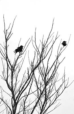 Photograph - Two Blackbirds by HH Photography of Florida