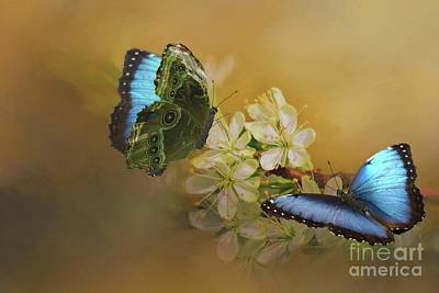 Photograph - Two Blue Morpho Butterflies On White Spring Flowers by Janette Boyd