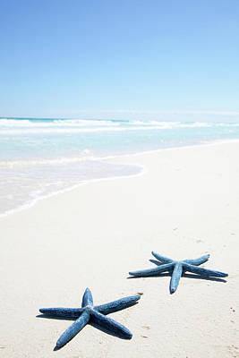 Two Blue Starfish On Tropical Beach Art Print