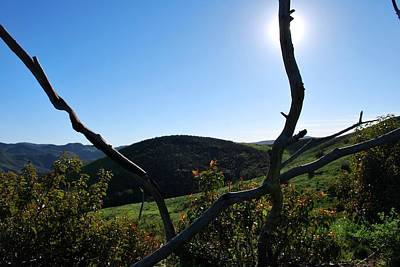 Photograph - Two Branches In The Hills Landscape by Matt Harang